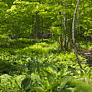 Green Landscape Of Summer Foliage Art Print