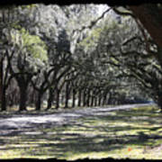 Green Lane With Live Oaks - Black Framing Art Print