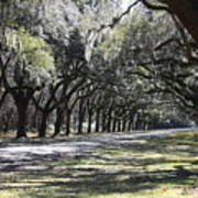 Green Lane With Live Oaks Art Print