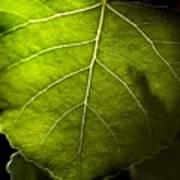Green Leaf Detail Art Print