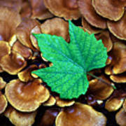 Green Leaf On Fungus Art Print
