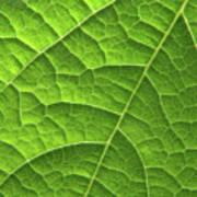 Green Leaf Structure Art Print