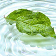 Green Leaf With Water Reflection Art Print