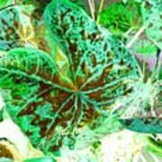 Green Leafmania 1 Art Print