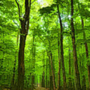Green Light Harmony - Walking Through The Summer Forest Art Print