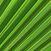 Green Palm Leaf Art Print