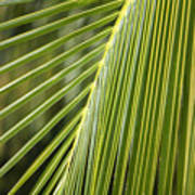 Green Palm Leaf Art Print