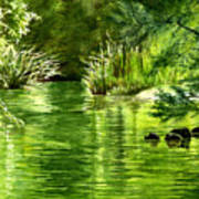 Green Reflections With Sunlit Grass Art Print