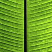 Green Ribs Art Print