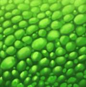 Green Scales Art Print