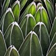 Green Spines Art Print
