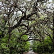 Green Swamp Oak Bower Art Print