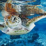 Green Turtle Print by Alexis Rosenfeld