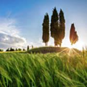 Green Tuscany Art Print