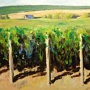 Green Vineyards Of Napa Art Print