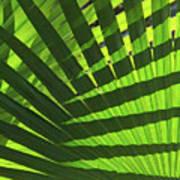 Green Weaver Art Print