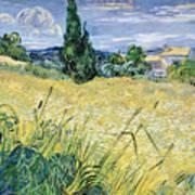 Green Wheatfield With Cypress Art Print