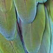 Green-winged Macaw #4 Art Print