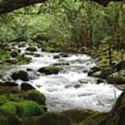 Greenbrier River Scene 2 Art Print