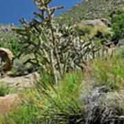 Greening Of The High Desert Art Print