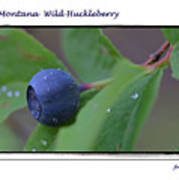 Greeting Card - Huckleberry #4 Art Print