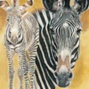 Grevy's Zebra Art Print
