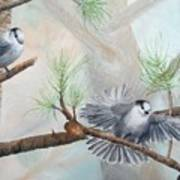 Grey Jays In A Jack Pine Art Print