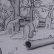 Grey Kangaroos Art Print