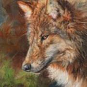 Grey Wolf Face Art Print