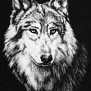 Grey Wolf Art Print by Melodye Whitaker