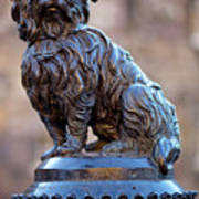 Greyfriars Bobby Print by Andre Goncalves