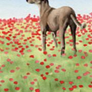 Greyhound In Poppies Art Print