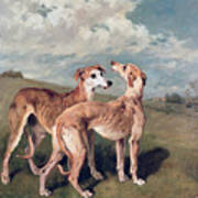 Greyhounds Print by John Emms