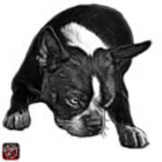 Greyscale Boston Terrier Art - 8384 - Wb Art Print