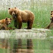 Grizzly Bear Family  Art Print