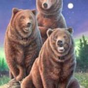 Grizzly Bears In Starry Night Art Print