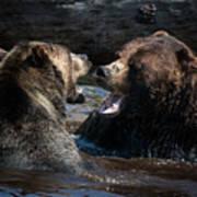 Grizzly Bears Art Print