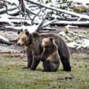 Grizzly Cub Holding Mother Art Print
