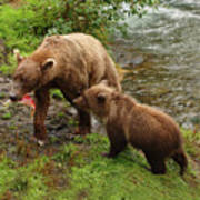 Grizzly Dinner For Two Art Print