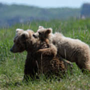 Grizzly  Mother And A Cub In Katmai National Park Art Print