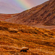 Grizzly Under The Rainbow Art Print