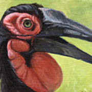 Ground Hornbill Art Print