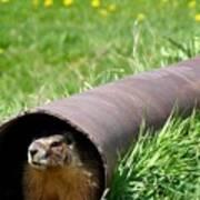 Groundhog In A Pipe Art Print
