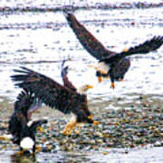 Group Of Eagles Art Print