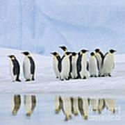 Group Of Emperor Penguins Art Print