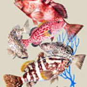 Grouper Montage Art Print