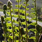 Growing Ferns Art Print