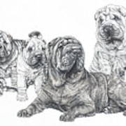 Growing Up Chinese Shar-pei Art Print by Barbara Keith