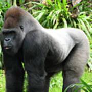 Grumpy Gorilla II Art Print