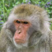 Grumpy Monkey Art Print